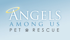 AngelsAmongUsPetRescue